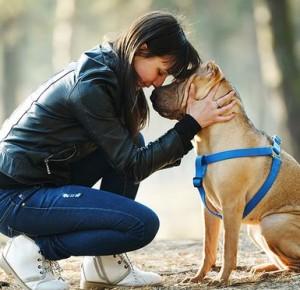 Divorce : la garde des animaux se fait en mode alternée