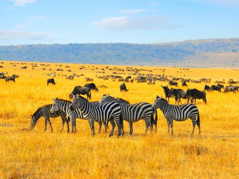 Les trois réserves à visiter pendant un voyage sur mesure au Kenya