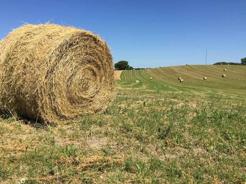 La préparation des silos de maïs et son impact sur la qualité du fourrage