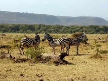 Découvrir deux parcs nationaux de la Tanzanie lors d'un safari
