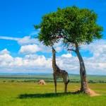 Voyage Afrique du Sud sur mesure