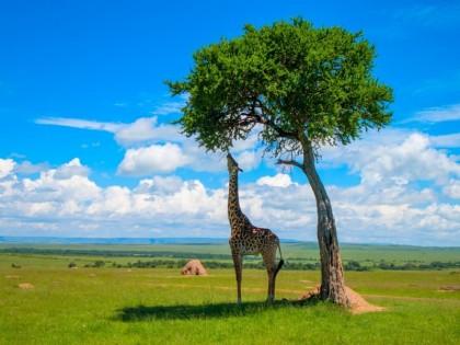 Explorer trois régions durant un voyage Afrique du Sud sur mesure
