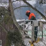 élaguer arbres propriété