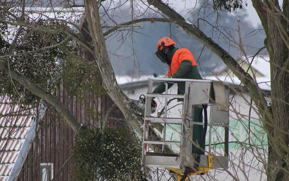 Élaguer les arbres de sa propriété : une obligation qui s'impose à tous